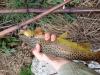 Воблер Illex Jackall Chubby 38 mm Floating